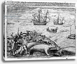 Постер Школа: Голландская 17в Hunting Walrus, illustration from 'The Three voyages of William Barents to the Arctic Regions'. 1600