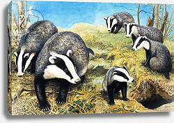 Постер Дэвис Р. (жив, дет) Badgers, from 'Nature Wonderland', 1970