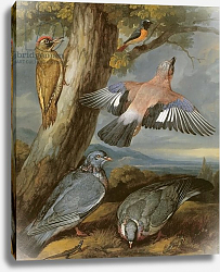 Постер Барлоу Франсис Jay, Green Woodpecker, Pigeons and Redstart, c.1650