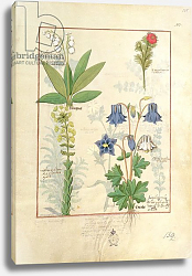 Постер Тестард Робинет (бот) Ms Fr. Fv VI #1 fol.135r Illustration from 'The Book of Simple Medicines'