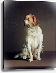 Постер Бойли Луи Portrait of a King Charles Spaniel