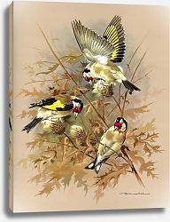 Постер Goldfinch 5