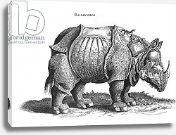 Постер Дюрер Альбрехт (последователи) Rhinoceros, no.76 from 'Historia Animalium' by Conrad Gesner published in July 1815