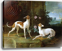 Постер Одри Жан-Батист Misse and Turlu, two greyhounds of Louis XV