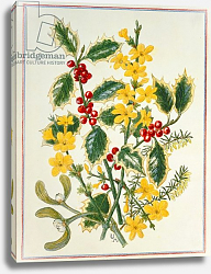 Постер Ходжсон Урсула (совр) Holly, Winter Jasmine, Heath and Mistletoe