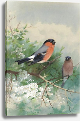 Постер A pair of bullfinches