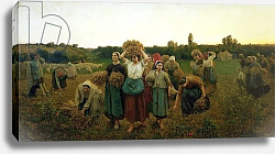 Постер Бретон Жюль Calling in the Gleaners, 1859