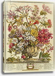 Постер Кастилс Питер October, from 'Twelve Months of Flowers' by Robert Furber engraved by Henry Fletcher