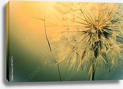 Постер Beautiful dandelion