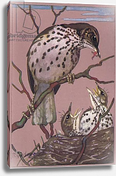 Постер Гаджон Ралстон (1910-84) Song Thrush, nest and young