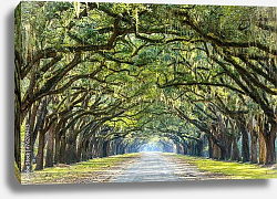 Постер США, Джорджия. Country Road Lined with Oaks in Savannah