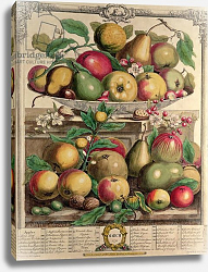 Постер Кастилс Питер March, from 'Twelve Months of Fruits', by Robert Furber engraved by Henry Fletcher, 1732