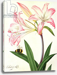 Постер Коньерс Джон (бот) Lilium Belladonna and Bee, 1786
