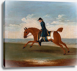 Постер Сеймур Джеймс One of Four Portraits of Horses - a Chestnut Racehorse Exercised by a Trainer in a Blue Coat 1730