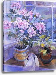 Постер Уэльс Сью (совр) Pink geranium on window seat, 1996,