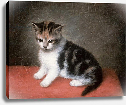 Постер Стаббс Джордж Miss Ann White's Kitten, 1790