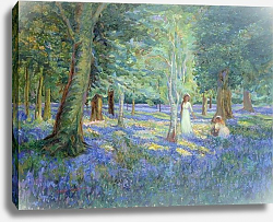 Постер Тиндалл Роберт (совр) Bluebell Wood, 1908
