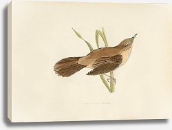 Постер Great Sedge Warbler 3
