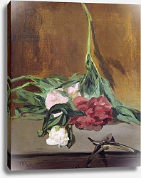 Постер Мане Эдуард (Edouard Manet) Stem of Peonies and Secateurs, c.1864