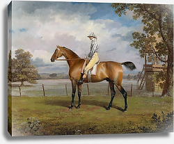 Постер Гаррад Джордж Portrait of a Racehorse Possibly Disguise with Jockey Up