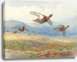 Постер A covey of grouse in flight