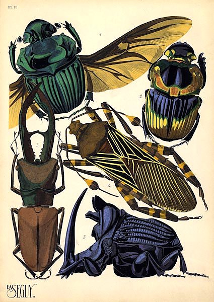 Insects by E. A. Seguy №7