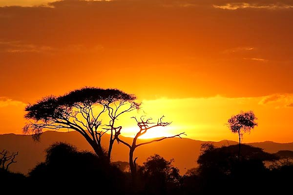 a book report on james shreeves sunset on the savanna People search engine and free white pages finds phone, address, email, and photos find people by name, email, address, and phone for free.