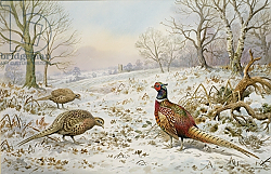 Постер Даннер Карл (совр) Pheasant and Partridges in a Snowy Landscape