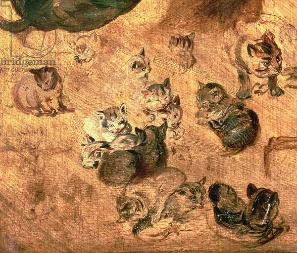 Study of cats, 1616