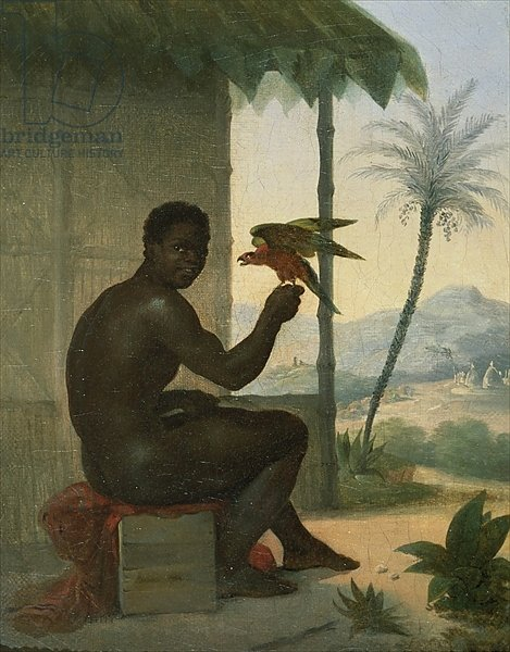 Brazilian negro with Tropical Bird
