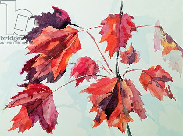 No.24 Autumn Maple Leaves