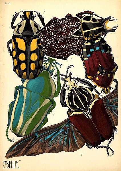 Insects by E. A. Seguy №3