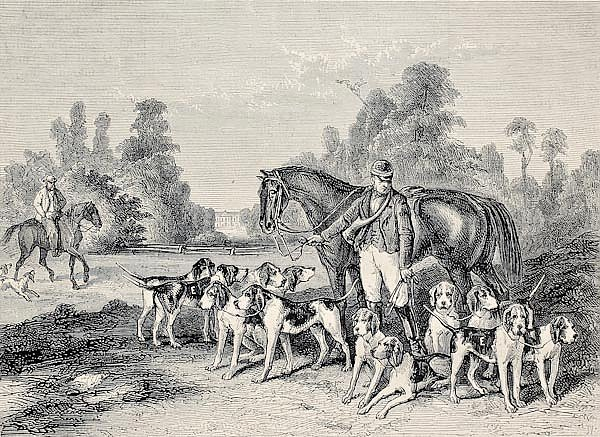 Hunting dog pack .From drawing of Duvaux, engraved by Cosson. Smeeton, published on L'Illustration,
