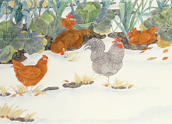 Hens in the Vegetable Patch