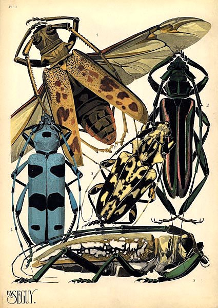 Insects by E. A. Seguy №14