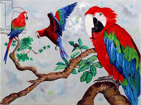 Macaws, 2006