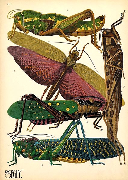 Insects by E. A. Seguy №18