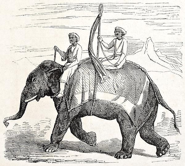 Elephant in Oude, antique Indian northern kingdom, By unidentified author, published on L'Illustrati