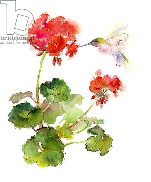 Hummingbird with Geranium, 2015,