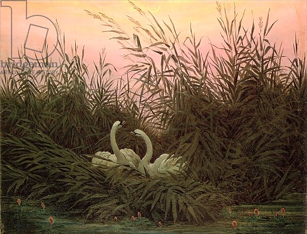 Swans in the Reeds, c.1820
