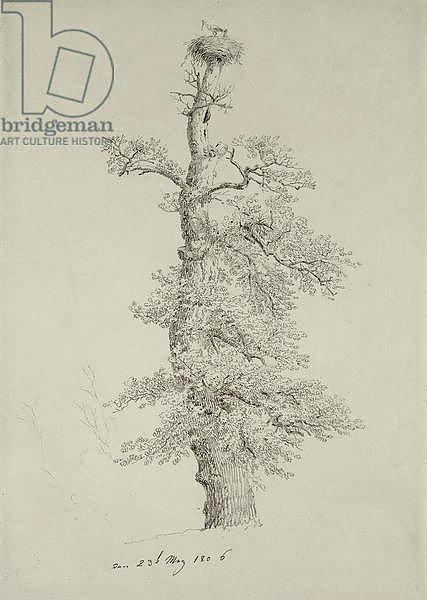 Ancient Oak Tree with a Stork's Nest, 23rd May 1806