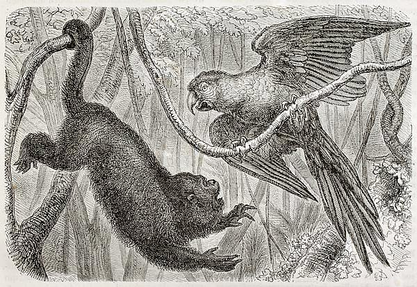 Monkey and a parrot in the jungle. Created by Bocourt and Dupre, published on Merveilles de la Natur