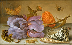 Постер Аст Балтазар Still life depicting flowers, shells and insects