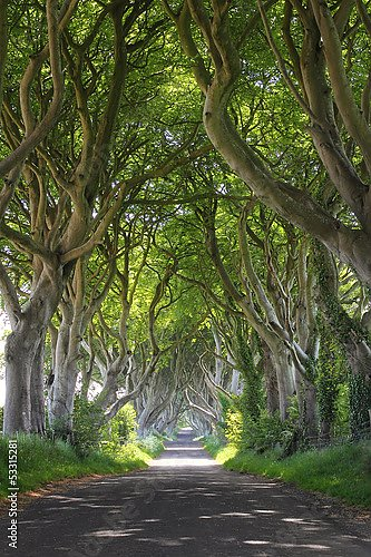 Ирландия. Буковая аллея Dark Hedges