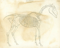 Постер Anatomy of the Horse