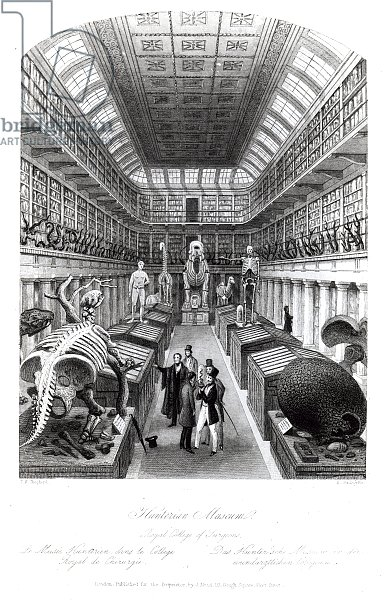 The Hunterian Museum, illustration to 'London Interiors', engraved by Edward Radclyffe, c.1840s
