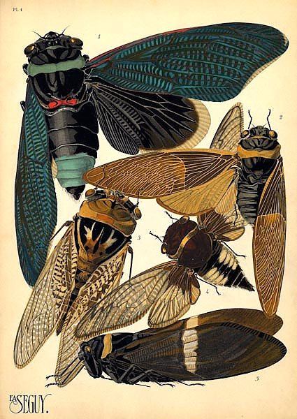 Insects by E. A. Seguy №1
