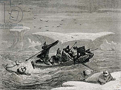 Постер Школа: Испанская Hunting Walrus with Harpoons in the Spitsbergen Islands, Svalbard archipelago