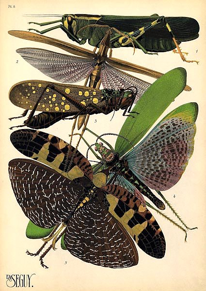 Insects by E. A. Seguy №19