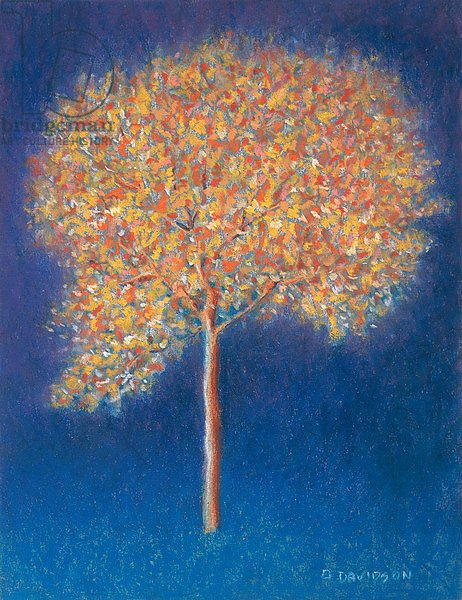 Tree in Blossom, 1997